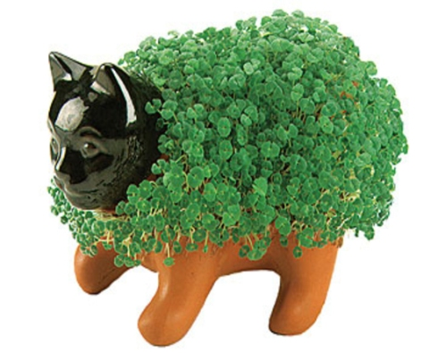 chia pet large